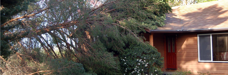 remove fallen tree