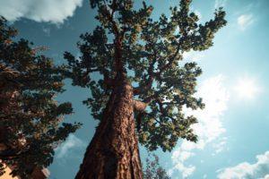 Cincinnati tree service and tips