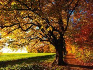 Cincinnati Tree Images