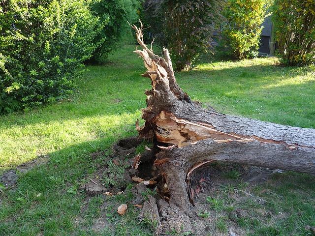 tree images fallen tree Cincinnati