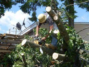 tree images Cincinnati storm damage