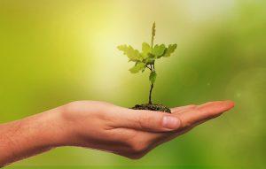 free trees in cincinnati